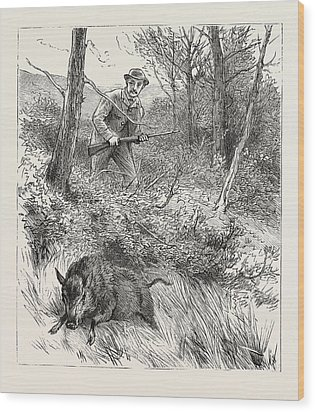 Starts A Pig While Looking For Woodcock Wood Print by English School