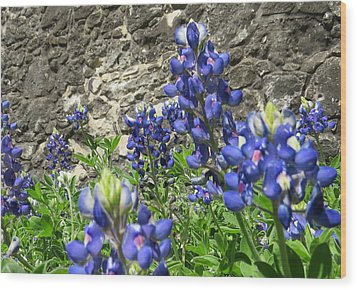 Wood Print featuring the photograph State Flower Of Texas - Bluebonnets by Ella Kaye Dickey