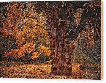 Stately Oak Wood Print by Priscilla Burgers