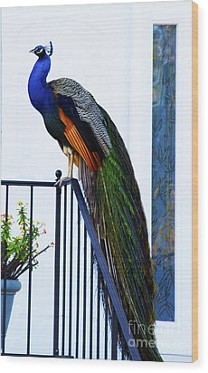 Stately Peacock Wood Print