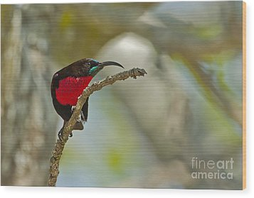 Stealth Attack Wood Print by Ashley Vincent