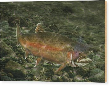 Steelhead Trout Spawning Wood Print by Randall Nyhof