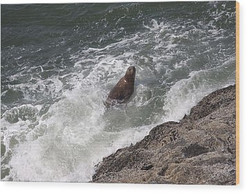 Steller Sea Lion - 0018 Wood Print by S and S Photo