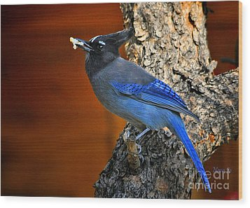 Steller's Jay In Colorado Wood Print by Nava Thompson