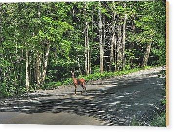 Sterling Valley Doe Wood Print