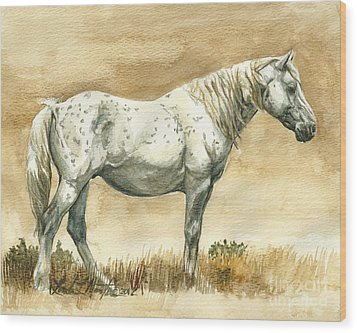 Sterling Wild Stallion Of Sand Wash Basin Wood Print