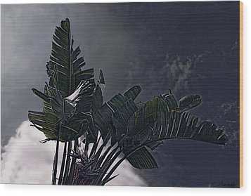 Wood Print featuring the photograph Banana Tree -still In A Storm #3  by Renee Anderson