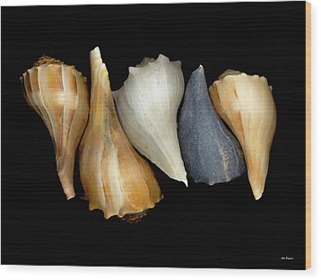 Still Life With Five Whelk Shells Wood Print