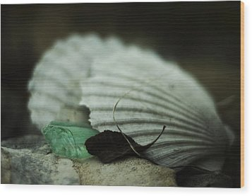 Still Life With Fossil Shells And Beach Glass Wood Print
