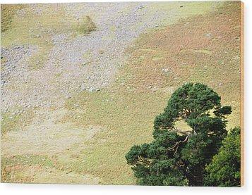 Stillness. Wicklow Mountains. Ireland Wood Print by Jenny Rainbow