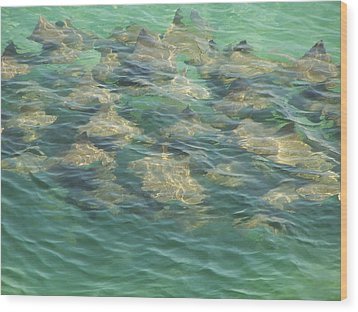 Wood Print featuring the photograph Stingray A by Michele Kaiser