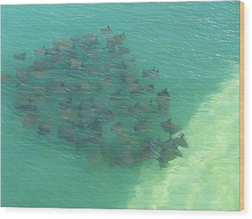 Wood Print featuring the photograph Stingray B by Michele Kaiser