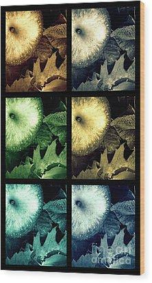 Stone Apples Wood Print by France Laliberte
