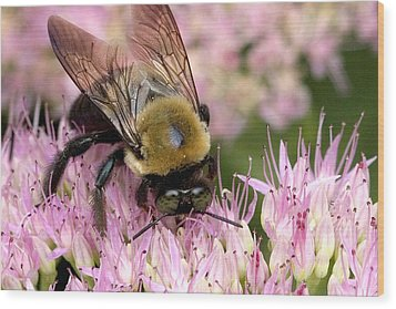 Stone Mountain Bumble Bee Wood Print by Gene Walls