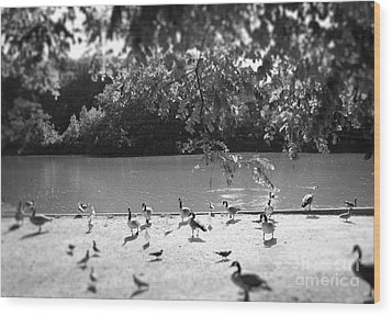 Stony Brook Pond Wood Print by Paul Cammarata