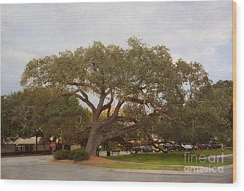 Stop And Rest Wood Print by Kay Pickens