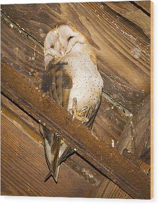 Stop Bothering Me Wood Print by Jean Noren