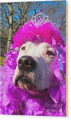 Stop Bsl Officer Do You Hate Me Because I'm A Pit Bull Or Cause I'm A Dude Wearing A Pink Tiara? Wood Print by Q's House of Art ArtandFinePhotography
