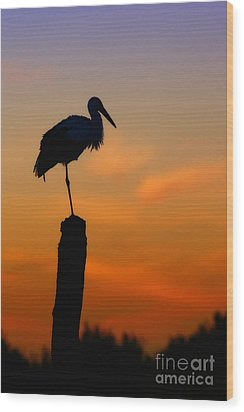 Storck In Silhouette High On A Pole Wood Print