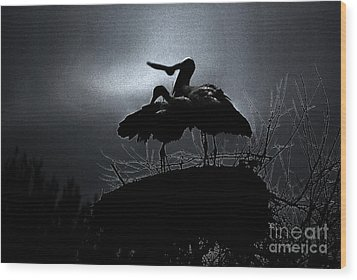Stork Couple Wood Print