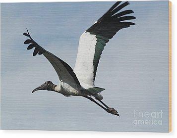 Stork In Flight Wood Print by Theresa Willingham