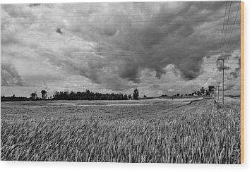 Storm Field - Canada Wood Print