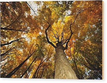 Storm King Forest Wood Print by Terry Cosgrave