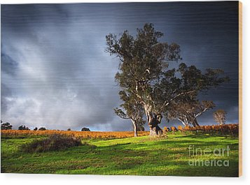 Storm Onto A Vineyard Wood Print by Boon Mee