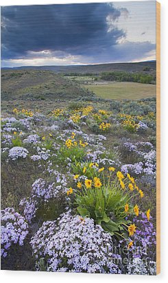 Storm Over Wildflowers Wood Print by Mike  Dawson