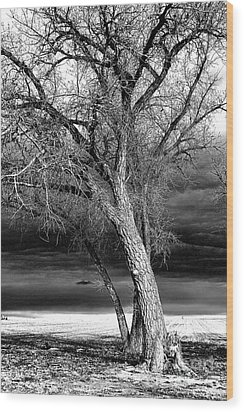 Storm Tree Wood Print by Steven Reed