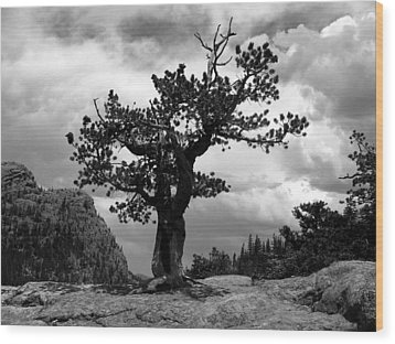 Storm Tree Wood Print by Tranquil Light  Photography