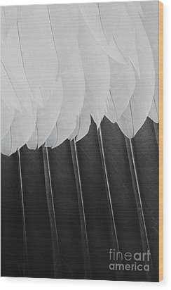 Stormy Feathers Wood Print by Judy Whitton
