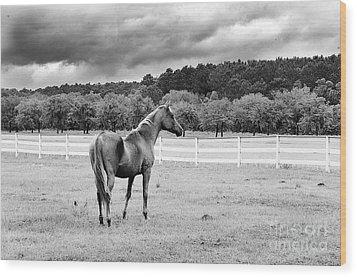 Stormy Pasture Wood Print by Scott Hansen