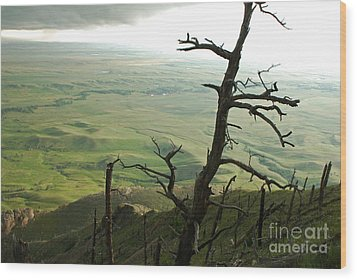 Stormy Tree Wood Print by Mary Carol Story