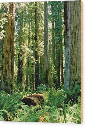 Stout Grove Coastal Redwoods Wood Print by Ed  Riche