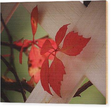 Straggler Wood Print