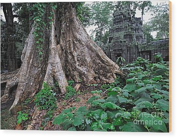 Strangler Fig Tree Roots On The Ancient Preah Khan Temple Wood Print by Sami Sarkis