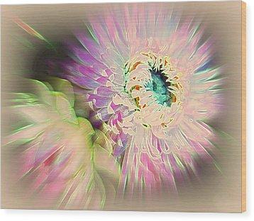Strawflower Awakening Wood Print by Shirley Sirois