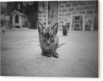 Wood Print featuring the photograph Stray Cat #1 by Antonio Jorge Nunes