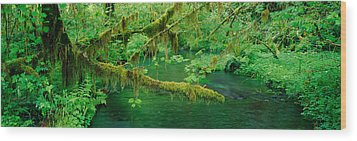 Stream Flowing Through A Rainforest Wood Print by Panoramic Images