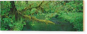 Stream Flowing Through A Rainforest Wood Print
