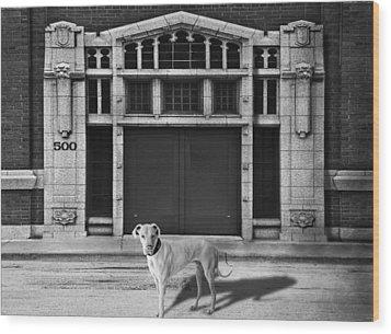 Street Dog Wood Print by Larry Butterworth