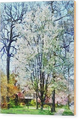 Street With White Flowering Trees Wood Print by Susan Savad