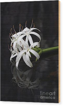 Wood Print featuring the photograph String Lily #1 by Paul Rebmann
