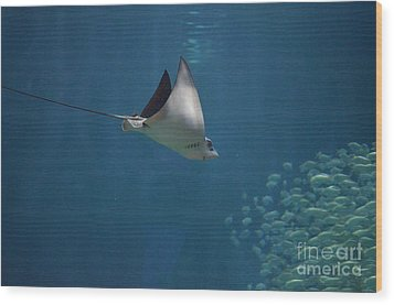 Stringray Heading Towards Fish Wood Print by DejaVu Designs