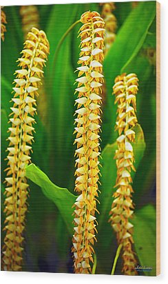 Wood Print featuring the photograph Strings Of Dendrochilum Orchids by Aloha Art