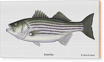 Striped Bass Wood Print by Charles Harden