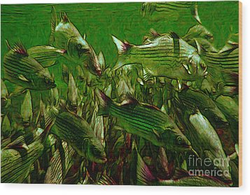 Striped Bass - Painterly V2 Wood Print by Wingsdomain Art and Photography