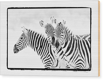 Wood Print featuring the photograph Striped Threesome by Mike Gaudaur