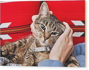 Stroking A Cat Wood Print by Tom Gowanlock